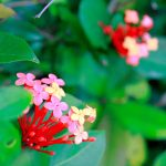 Các loài hoa mùa đông ở Nhật Bản