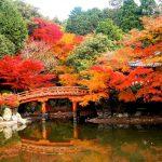 Thành phố Kyoto Nhật Bản