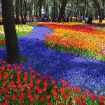 Công viên Hitachi – thiên đường hoa ở Nhật Bản
