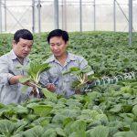 Nhiều doanh nghiệp Nhật sẽ đầu tư vào nông nghiệp công nghệ cao tại Việt Nam