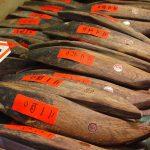 Đặc sản cá ngừ khô Nhật Bản (Katsuobushi)
