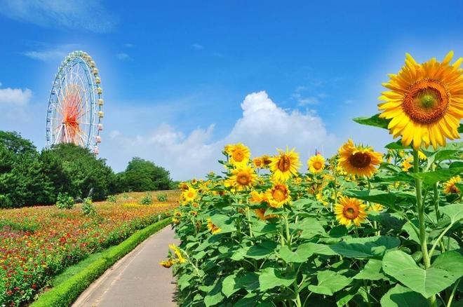 Công viên Hitachi - thiên đường hoa ở Nhật Bản