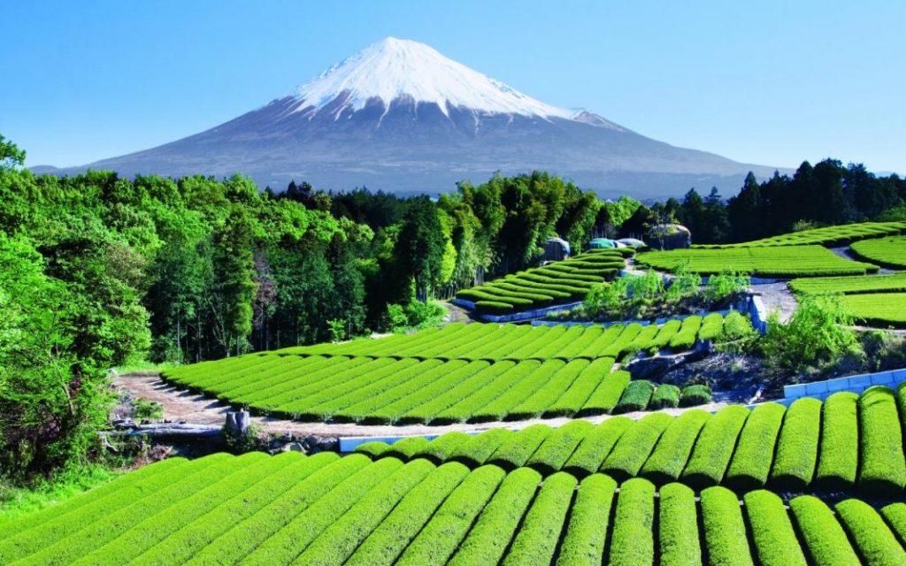 Mt.-Fuji-3
